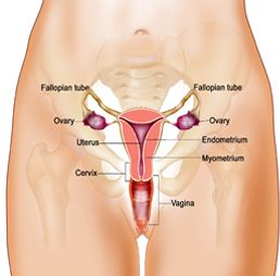 Affordable Cervical Cancer Treatment