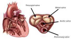 Minimally Invasive Valve Surgery