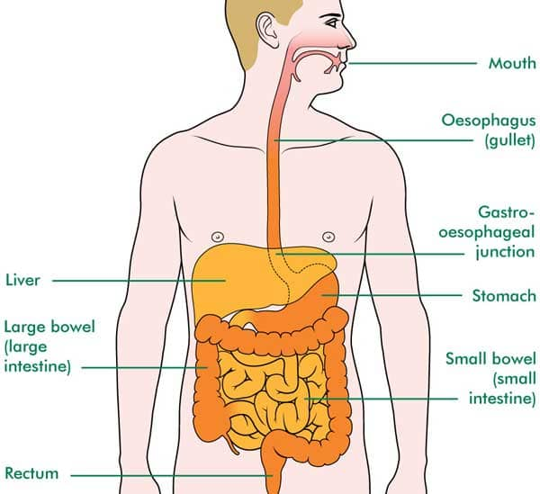 Oesophagus Cancer Treatment in India