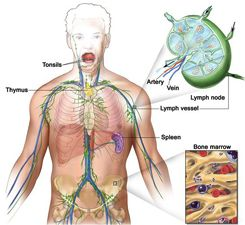 Types of Lymphoma Cancer