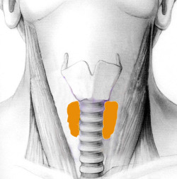 Minimally Invasive Surgical Treatment for Thyroid at World Class Hospitals in India