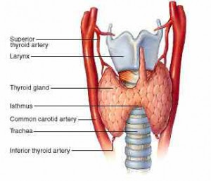 All About Thyroid –  A Highly Advanced Surgical Treatment for Thyroid at World Class Hospitals in India